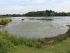 weed-choked-lake