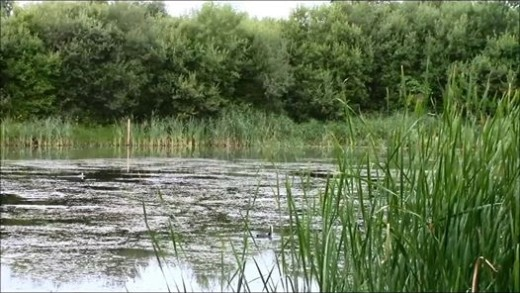 Brentwood anglings, Par fishery back lake